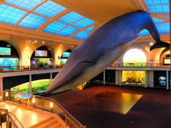 The American Museum of Natural History в Нью-Йорке